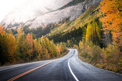 季節「treelined road through Canadian rockies, Alberta, Canada」:スマホ壁紙(7)