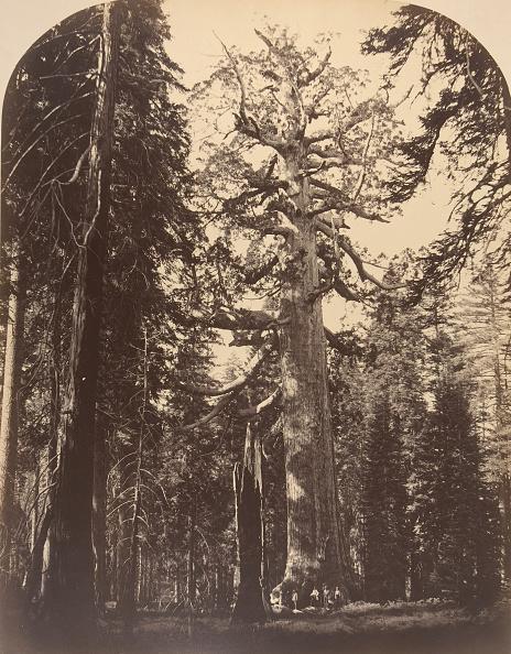 Grove「The Grisly Giant」:写真・画像(5)[壁紙.com]