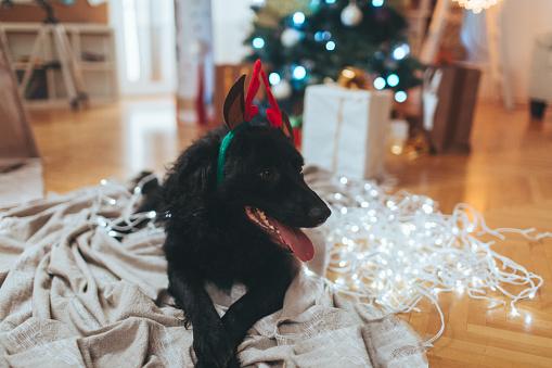 お正月「ペットのためのクリスマス」:スマホ壁紙(5)