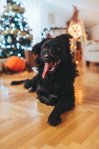 お正月「ペットのためのクリスマス」:スマホ壁紙(6)