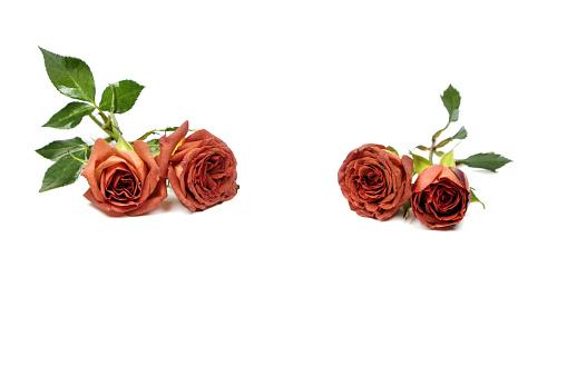 七夕「The roses」:スマホ壁紙(19)