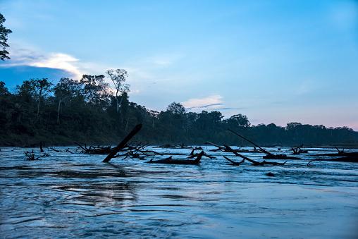 Amazon Rainforest「Tambopata River in Peruvian Amazon」:スマホ壁紙(8)