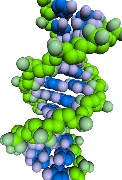 DrugModel: DNA Packing:スマホ壁紙(壁紙.com)