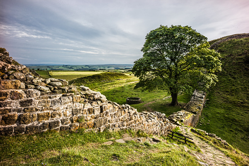 Single Tree「Sycamore gap Hadrian's wall」:スマホ壁紙(11)