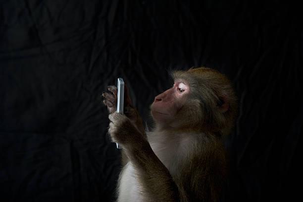Japanese monkey, Monkey northern limit:スマホ壁紙(壁紙.com)