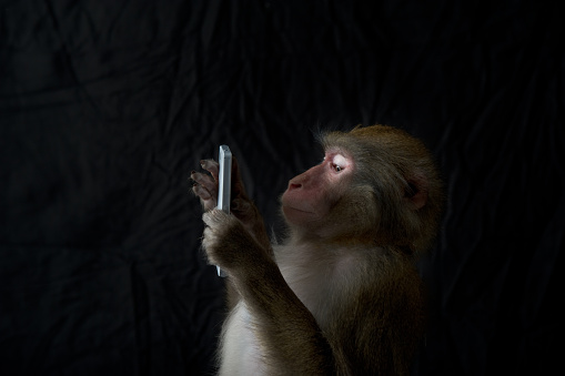 Wireless Technology「Japanese monkey, Monkey northern limit」:スマホ壁紙(15)