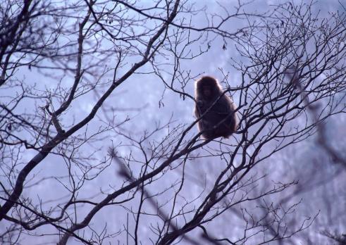 Nikko City「Japanese Monkey」:スマホ壁紙(11)