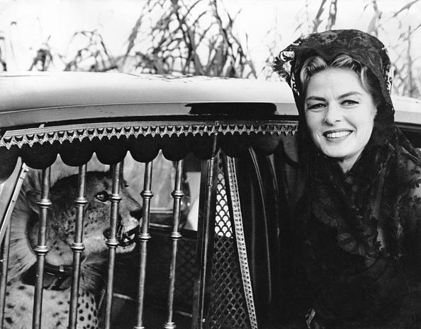 Big Cat「Ingrid Bergman」:写真・画像(6)[壁紙.com]