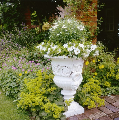 ペチュニア「white urn with petunia & argyranthemum, geranium & alchemilla behind, july」:スマホ壁紙(19)