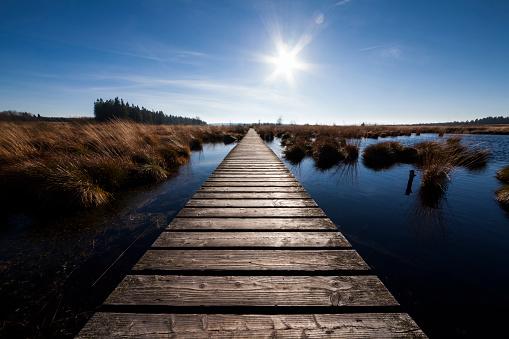Belgium「Boardwalk over pond in Brackvenn/Hohes Venn nature reserve (autumn)」:スマホ壁紙(13)