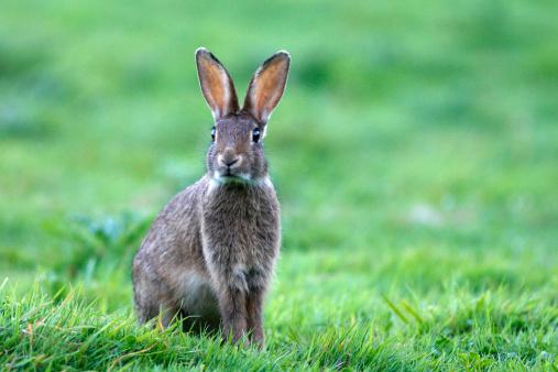 うさぎ「 Rabbit . 」:スマホ壁紙(17)