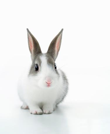 うさぎ「A rabbit」:スマホ壁紙(13)