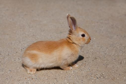 うさぎ「Rabbit」:スマホ壁紙(9)