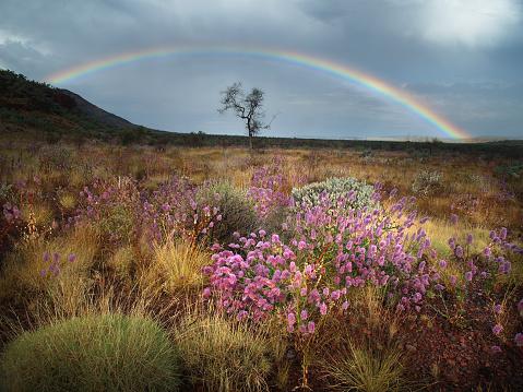 虹「スプリング雷雨のカリジニ国立公園」:スマホ壁紙(6)