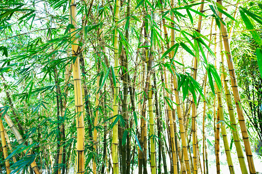 Zhongshan - Guangdong Province「Bamboo grove in China」:スマホ壁紙(10)