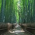 竹林壁紙の画像(壁紙.com)