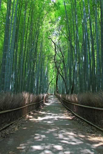 Bamboo Grove「Bamboo grove, Kyoto Prefecture, Honshu, Japan」:スマホ壁紙(10)