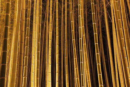 Annual Event「Bamboo grove, floodlit for Hanatouro Event, in Arashiyama」:スマホ壁紙(5)