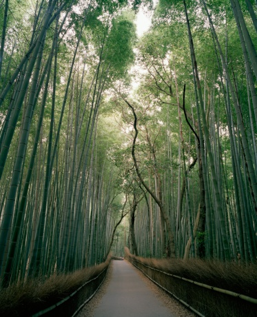 Grove「Bamboo Grove, Sagano District, Kyoto, Japan」:スマホ壁紙(11)