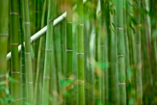 Grove「bamboo grove」:スマホ壁紙(15)