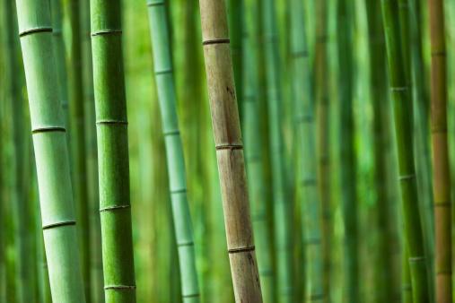 Grove「bamboo grove」:スマホ壁紙(3)
