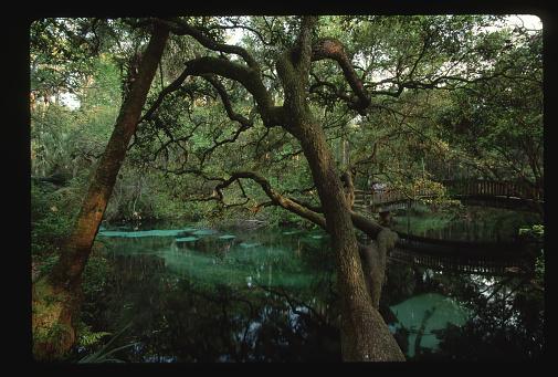Ocala National Forest「Oak Overhanging Fern Hammock Springs」:スマホ壁紙(12)