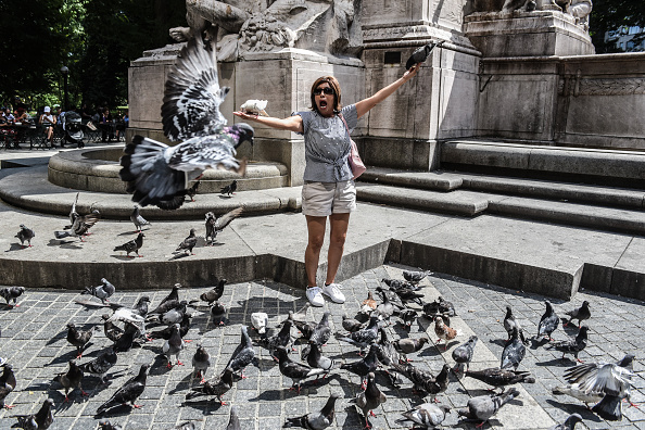 Pigeon「New York City Hit With Late Summer Heat Wave With Scorching Temperatures」:写真・画像(5)[壁紙.com]