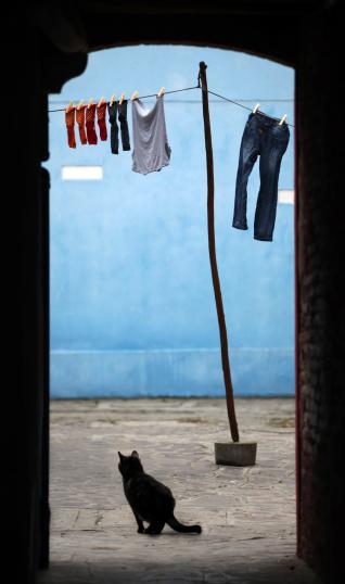 Hosiery「Black cat in Burano Venice」:スマホ壁紙(9)