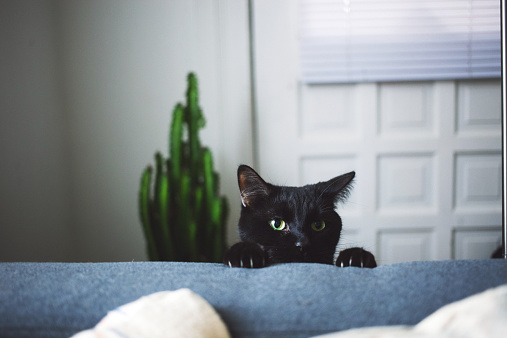 猫「Black cat in living room peeking over arm rest of sofa」:スマホ壁紙(15)
