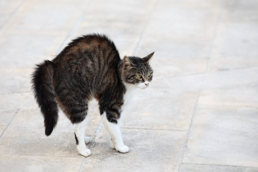 Animals Hunting「Scared cat」:スマホ壁紙(19)
