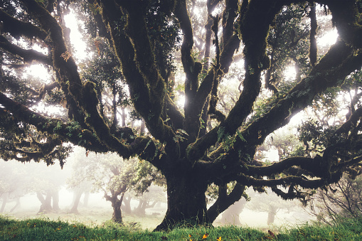 Dramatic Landscape「Mysterious 1000 Years Old Laurel Trees On Madeira Island」:スマホ壁紙(18)