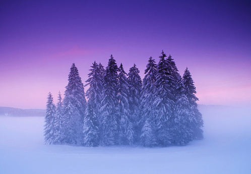 Fairy Tale「Mysterious small winter forest under dramatic sunset sky」:スマホ壁紙(15)