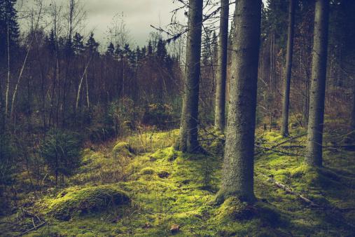 Finland「mysterious forest」:スマホ壁紙(16)