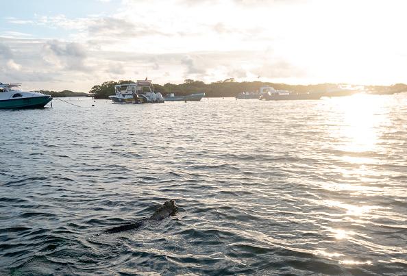 世界遺産「Nature and Human Lives Seek Equilibrium In Galapagos」:写真・画像(10)[壁紙.com]