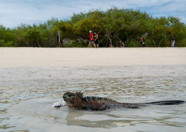 世界遺産「Nature and Human Lives Seek Equilibrium In Galapagos」:写真・画像(4)[壁紙.com]