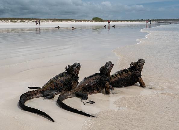 世界遺産「Nature and Human Lives Seek Equilibrium In Galapagos」:写真・画像(5)[壁紙.com]