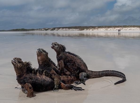 世界遺産「Nature and Human Lives Seek Equilibrium In Galapagos」:写真・画像(6)[壁紙.com]