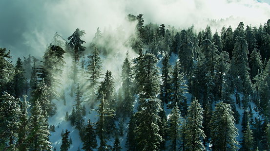 Angeles National Forest「Sun Shining on Mist Wreathed Trees - Drone Shot」:スマホ壁紙(13)