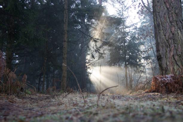 足のパスに木を通して輝く太陽:スマホ壁紙(壁紙.com)