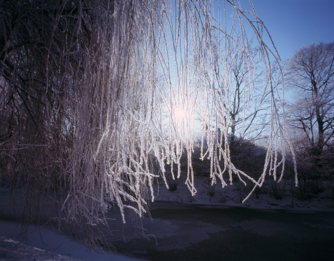 North Brabant「Sun shining through hoarfrost covered branches」:スマホ壁紙(5)