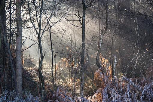 Grove「Sun shining through winter forest」:スマホ壁紙(8)