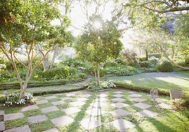 Sun shining through trees in garden:スマホ壁紙(壁紙.com)