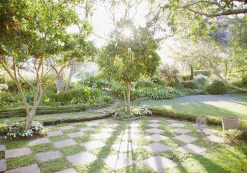 Lawn「Sun shining through trees in garden」:スマホ壁紙(6)