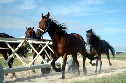 Horse「Race horses in Training」:スマホ壁紙(4)