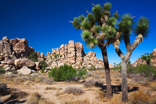 High Country「A photo of the desert during the day, including Joshua Trees」:スマホ壁紙(12)