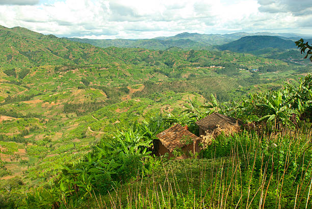 Afican フィールドグリーンのファームランドの中心に位置し、アフリカ:スマホ壁紙(壁紙.com)