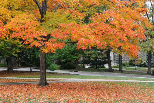 Pennsylvania「Campus of Lehigh University」:スマホ壁紙(11)