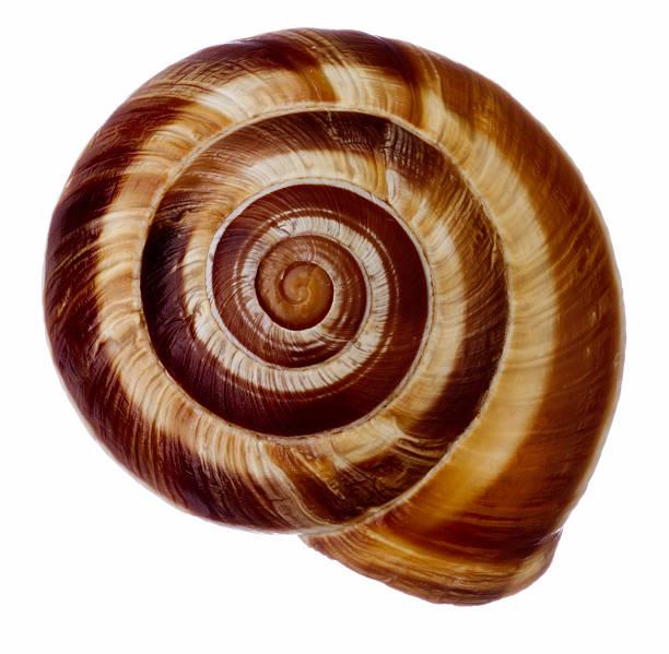 Edible snail (Helix sp.):スマホ壁紙(壁紙.com)