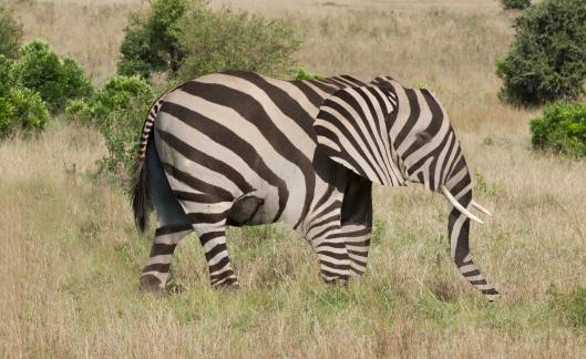 ミリタリー「Elephant with zebra camouflage」:スマホ壁紙(19)