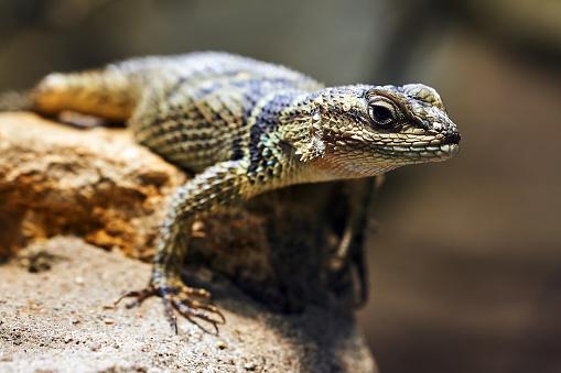Dragon「Reptile」:スマホ壁紙(19)